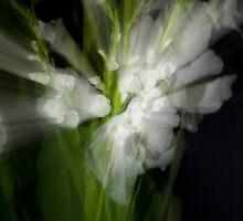 Pure beauty (Zoom effect) by Jan Clarke