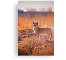 The Hunter Canvas Print