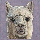 Natures Fiber Alpaca Project by Dena Kotka-Holtz