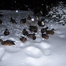 Wintertime Ducks by DeathlyMad