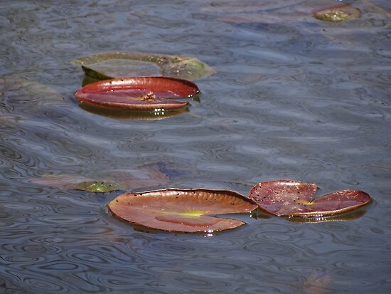 Lily Pads by vigor