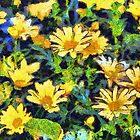 Vinny's daisies  by PhotosByHealy