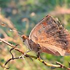 Old Butterfly by John-Peter