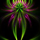 Lily of Apophysis by Virginia N. Fred