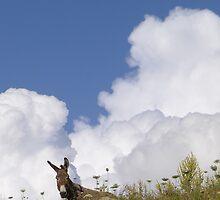 Eeyore in Greece 2012 by AntoneOz