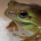 American Green Tree Frog by AnnDixon