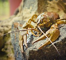 The Crawfish On A Stone by GrishkaBruev