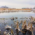 Wild Bog. Russian Nature In Winter by GrishkaBruev