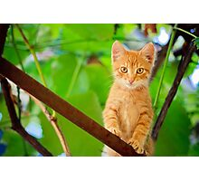 Young Kitten Sitting On Branch Photographic Print