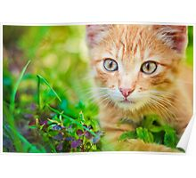 Young Kitten Is Hunting On Green Grass Poster