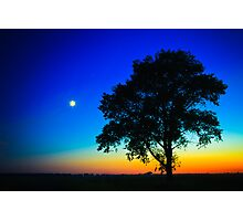 Sunset With A Silhouette Of A Lonely Tree Photographic Print