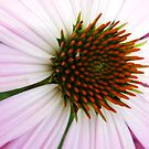 Coneflower by WildestArt