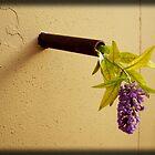 Emerging Lavender by SisterSunshine