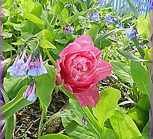 Bluebells and One Pink Tulip by TrendleEllwood