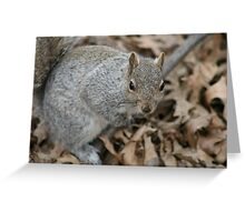 Scramble the Squirrel Greeting Card