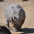 Southern White Rhinoceros by JMG1883