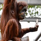 Busy Orangutan by Jeanne Peters