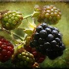 Blackberries On Canvas by Crista Cowan