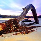 Driftwood on Scamander Beach  Tasmania by MisticEye