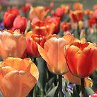 Tulips by Gene Praag