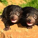 Baby Devils  Tasmania by MisticEye