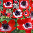 Many Anemones  by Avril Harris