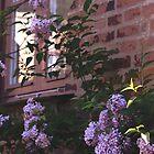 Brick and Lilacs by AMGunn