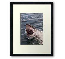 Great white shark (Carcharodon carcharias) Framed Print