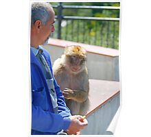 Barbary Macaque sitting beside a man In Gibraltar Poster