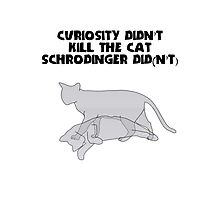 Schrodingers' Cat - Curiosity Photographic Print