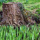 Tree Stump by John Dalkin