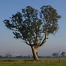Thompsons Rd Tree - 3 by Franz Grunta
