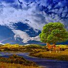 Horses on river by harietteh