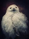 Snowy Owl by AD-DESIGN