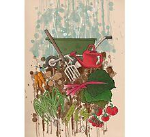 Veggie Garden Photographic Print
