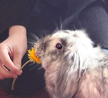 Dandelion Treat by missmoneypenny