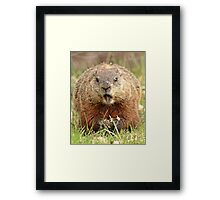 Hey! Where is the toy inside? what a rip off! Framed Print