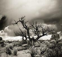 """The Speaking Tree"" by Zero Dean"