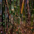 Kao Sok Bamboo by Duane Bigsby