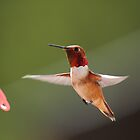 Hummingbird in flight by KansasA