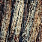 Yosemite bark by possumhollow