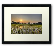 Ricefield Sunrise Chiang Rai Framed Print