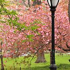 spring in the park by natalie angus