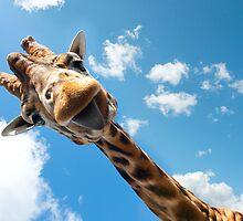 Hello Giraffe! by sallyrose1