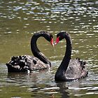Black Swan Pair ~ Shepreth Wildlife Park ~ Hertfordshire, 2013 by Samantha Creary
