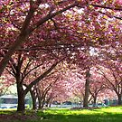 Spring time in New York City by Alberto  DeJesus