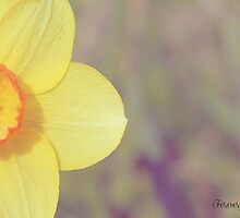 Daffodil by forevermemories