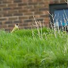 Green Woodpecker! by Lauren Tucker