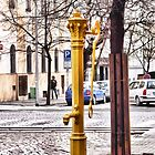 The yellow water post by brijo
