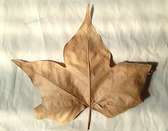 Old Leaf by Sorcha Whitehorse ©